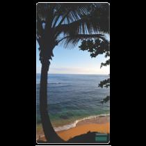 Kauai Palm Thumbnail