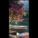 Full Bloom Thumbnail